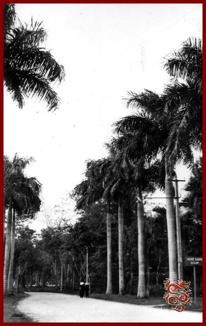 Hanoi la capitale du tonkin for Jardin indochine